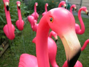 A different kind of Pink Flamingos...